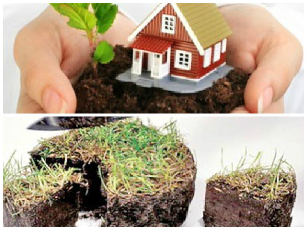 Оформление земли под частным домом перед